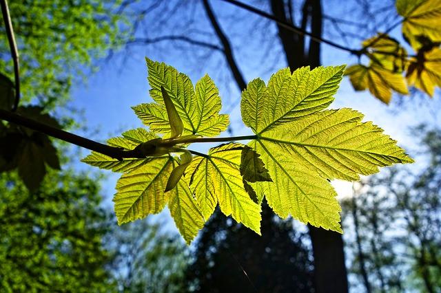 leaf-3332211_640