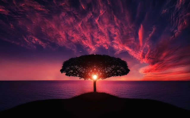 tree of life 340x398