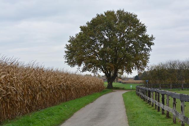 tree with farm corn